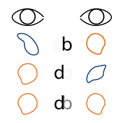 Schema de l'oeil directeur dans le cas d'une personne dyslexique.