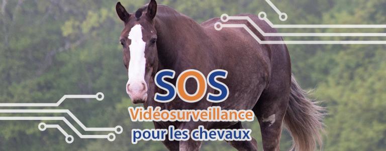 SOS télésurveillance vidéosurveillance des chevaux
